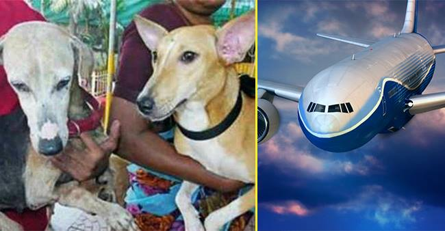 2 Dogs, Firangi and Angel From Mumbai Streets Are All Set To Fly Abroad For a New Start