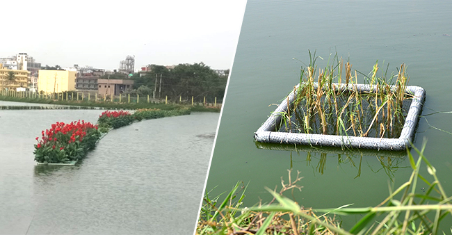 Journey From A Garbage To Largest Floating Lake, This Bengaluru Lake Enters Limca Book Of Records