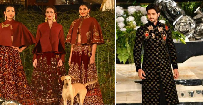 Stray Dog Takes Away The Limelight From Sidharth Malhotra's Ramp Walk At Rohit Bal's Show