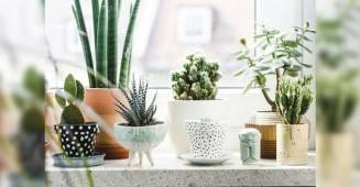 5 Innovative Ways You Can Take the Ambience of Your Home to the Next Level with decorative plants