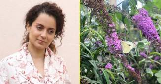 Kangana Ranaut shares pictures of her garden in Manali, leaves fans in wanderlust