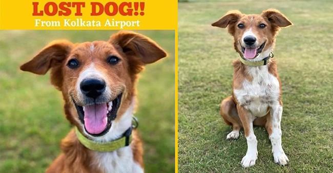After Hubby Vatsal Sheth, Ishita Dutta Styles Her Darling Pet 'Happy'