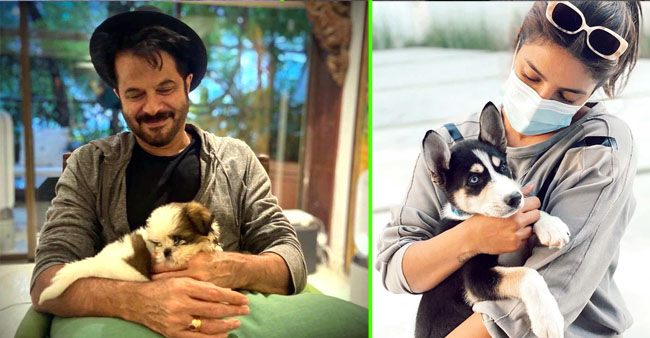 Anil Kapoor to Priyanka Chopra: B-town celebrities that adopted pets during the lockdown