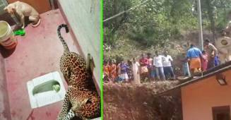 Stray Dog Found Itself Locked Inside A Toilet With A Leopard; Twitter Reacts