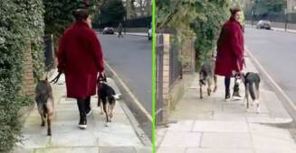 PeeCee Stepped Out With Her Dogs In London & Had An Impromptu 'Palat' Moment