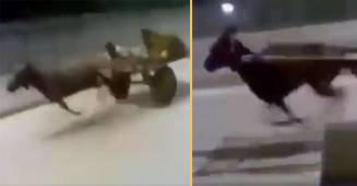 Viral Video Of Donkey Running At A High Speed On A Busy Highway Puzzles All