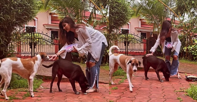 Rhea Chakraborty appeals to feed the stray dogs, flauntd her love on social media