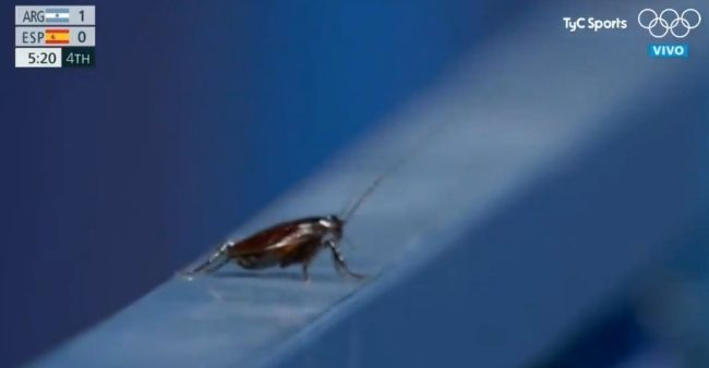 Cameraman channels wildlife videographer taping a cockroach in Tokyo Olympics, netizens response are hilarious